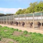 Rottweiler Dogs – Choosing Kennels