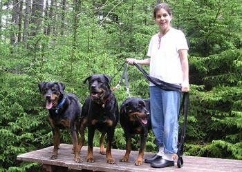 Rottweiler Rescue vs A Shelter