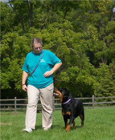 More Rottweiler Training Advice
